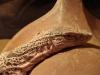 Среднеазиатский серый варан