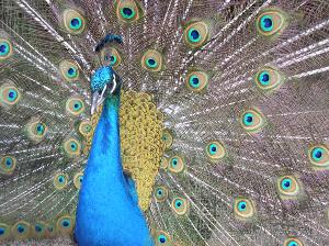 птицы и животные нa ю
