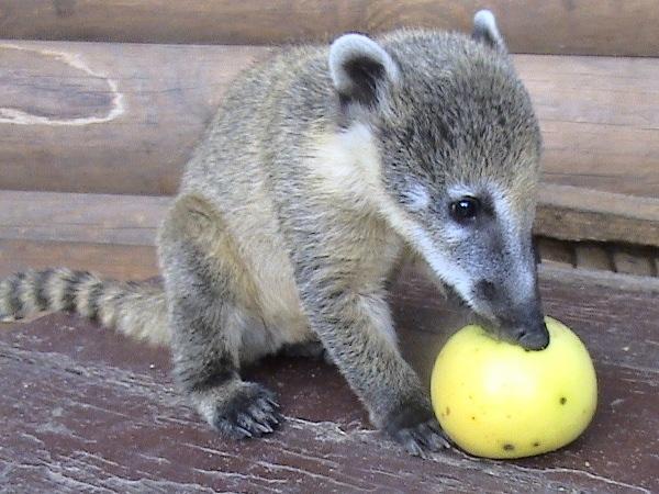 Питомцы зоопарка будут благодарны за…