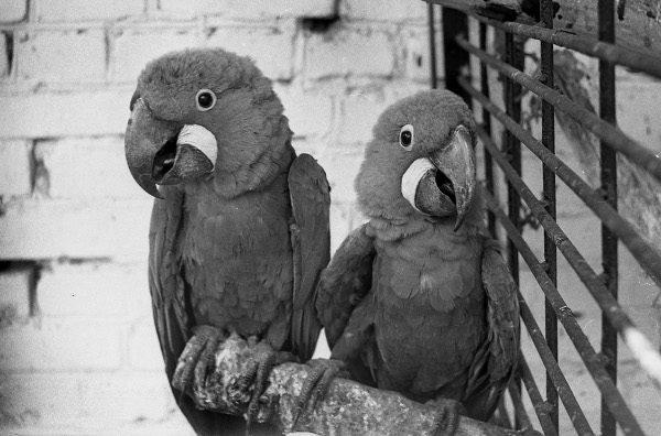 Гродненский зоопарк в 1973 году